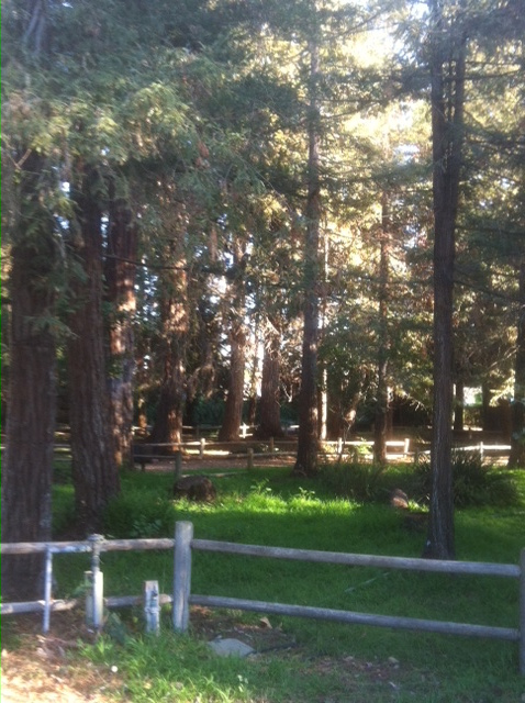 Stowe Grove Redwoods
